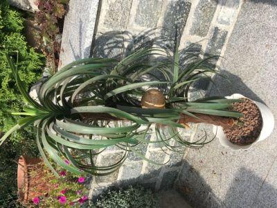 Plastová palma
