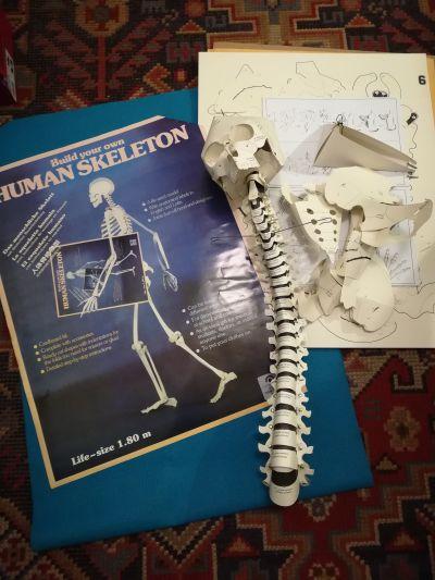 Papierový model ľudskej kostry v životnej veľkosti