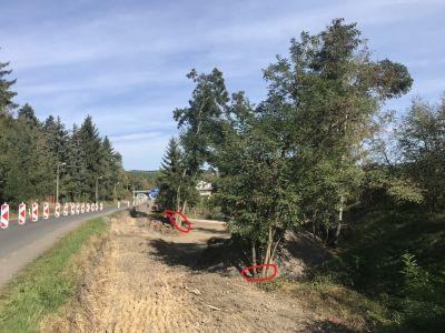 Dřevo (stromy) za odvoz