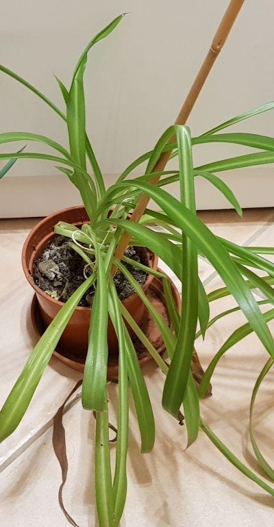 Rostlinku - zřejmě Zelenec (3)