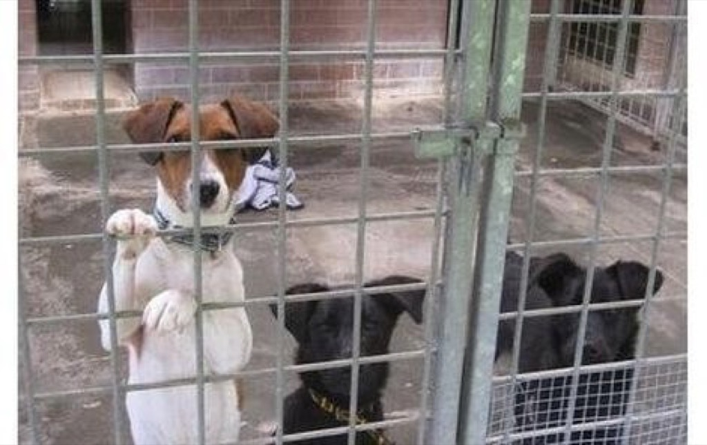 Psí a kočičí krmivo pro útulek Archa | VšezaOdvoz - Darujte ...